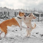 a snow day dog fight
